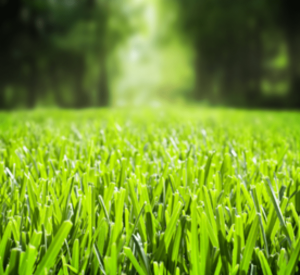 ride-on-mower-grass-min