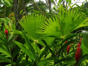 ride-on-mower-tropical-plants-min