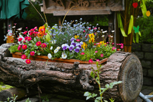 stihl-cape-town-spring-flowers-in-log-min