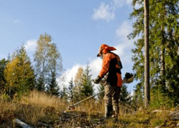 Operating Stihl Brushcutters: From Start to Finish