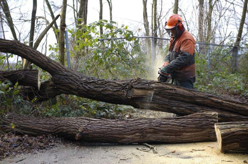 stihl-chainsaw-man-cutting-tree-min