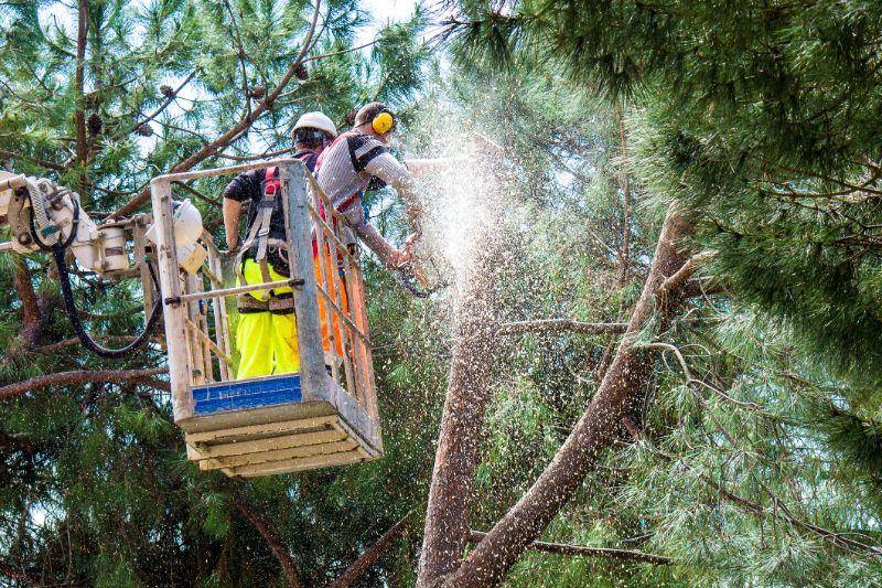 stihl-chainsaws-lumberjacks-in-tree-min