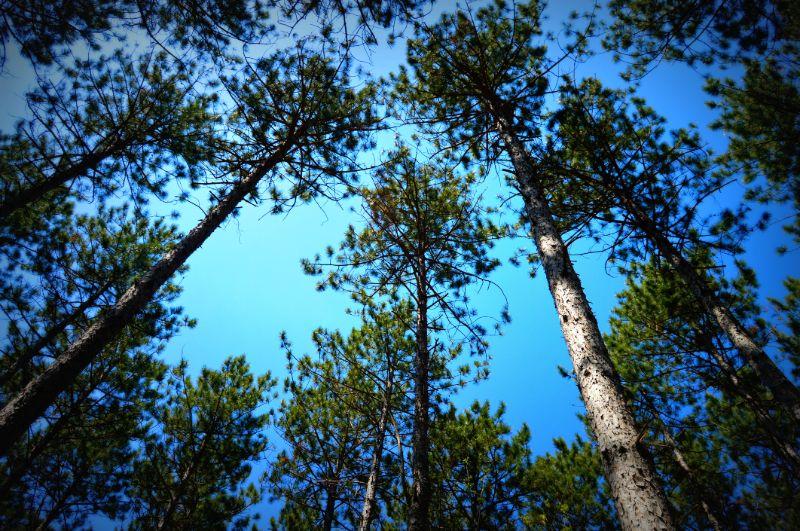 stihl-chainsaws-tree-canopy-min